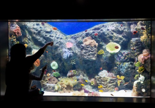 lotte world aquarium-6